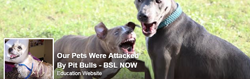 pet-attacked-by-pit-bulls