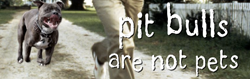 pit-bulls-are-not-pets