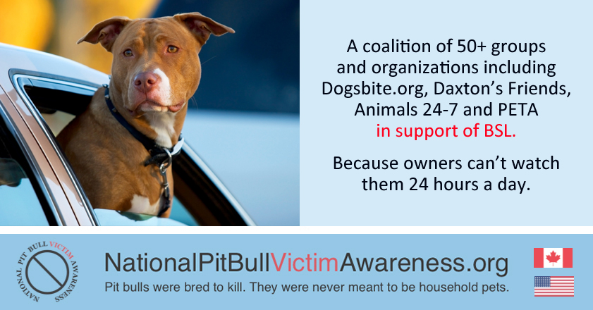 Recognizing victims of pit bull attacks and the need for BSL