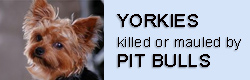 Yorkies and pit bulls